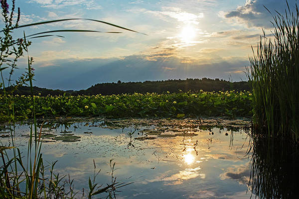Photograph - Concord Ma Great Meadows Sunrise Pond Lotus Bloom Grass by Toby McGuire