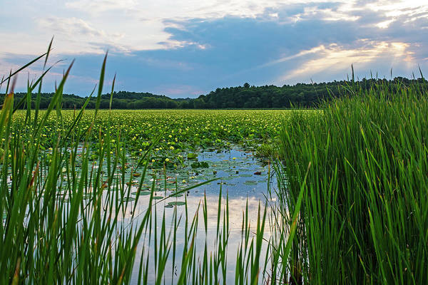 Photograph - Concord Ma Great Meadows Sunrise Pond Tall Grass Lotus Bloom by Toby McGuire
