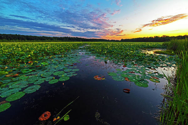 Photograph - Concord Ma Great Meadows Sunset Lotus Bloom Lilly Pads by Toby McGuire