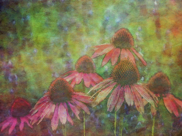 Coneflowers Among The Lavender 1667 Idp_2 Art Print