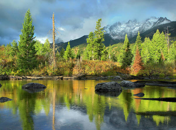 Wall Art - Photograph - Conifers Along River, Mt Saint John by Tim Fitzharris