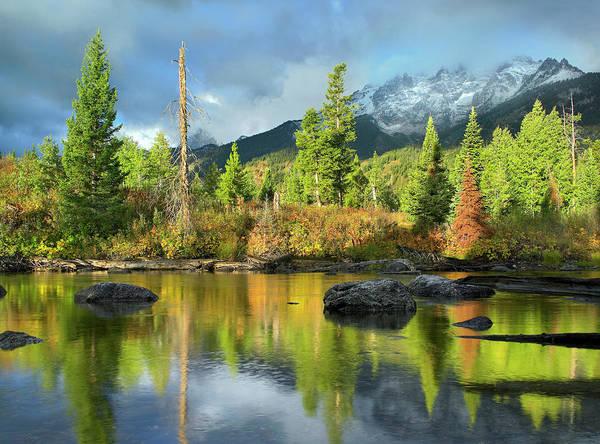 Photograph - Conifers Along River, Mt Saint John by Tim Fitzharris