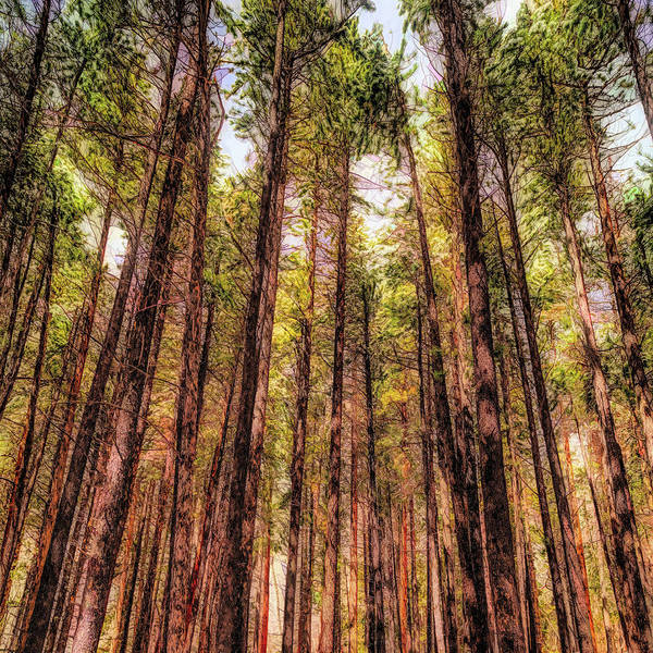 Wall Art - Photograph - Conifers - Painting 1 by Eric Glaser