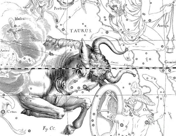 Wall Art - Drawing - Constellation Of Taurus by Johann Hevelius