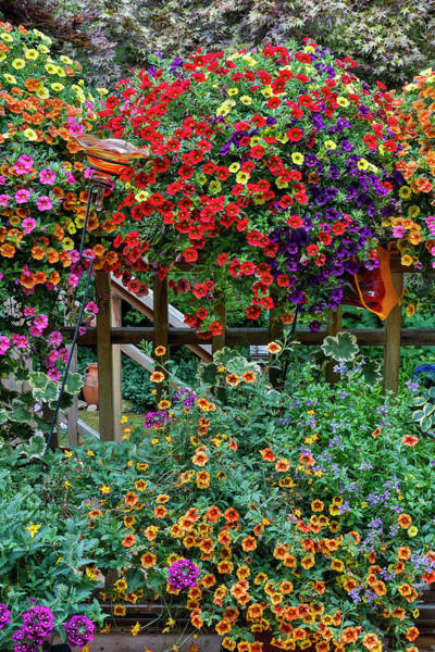Wall Art - Photograph - Container Gardening On Deck With Annual by Darrell Gulin