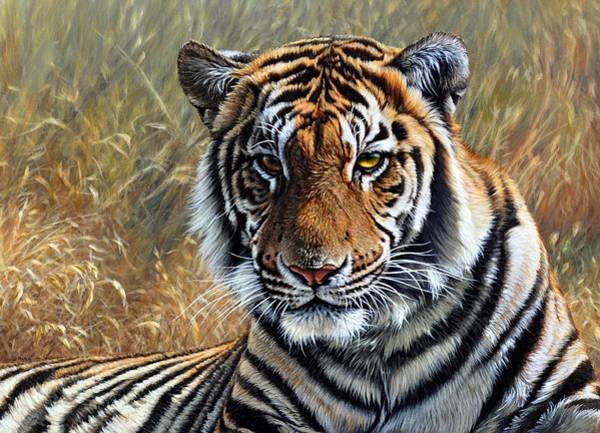 Painting - Contemplation - Tiger Portrait by Alan M Hunt