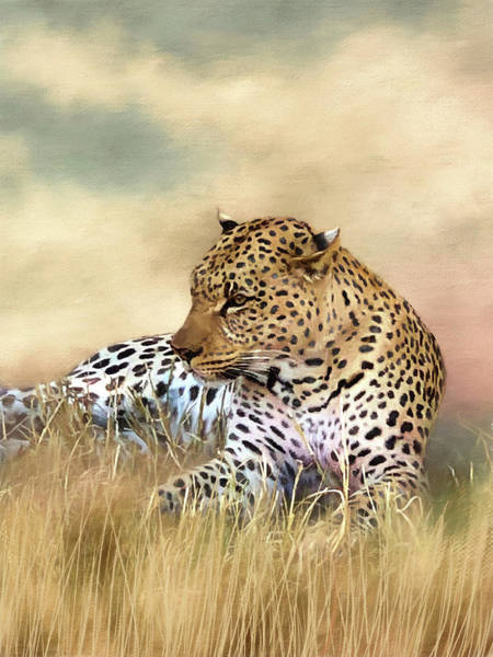 Photograph - Content Leopard by Donna Kennedy