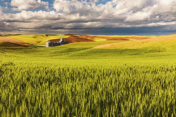 Wall Art - Photograph - Contoured Rolling Hills Of Wheat by Adam Jones