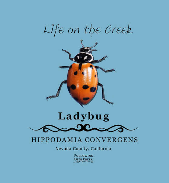 Digital Art - Convergens Ladybug by Lisa Redfern