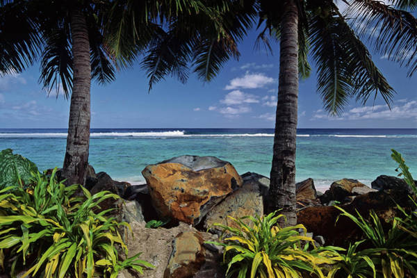 Rarotonga Photograph - Cook Islands, Rarotonga, Rocks And Palm by Glen Allison