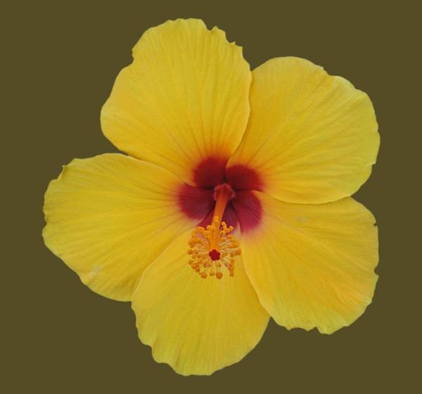 Wall Art - Photograph - Cool Bloom by Charles Stuart
