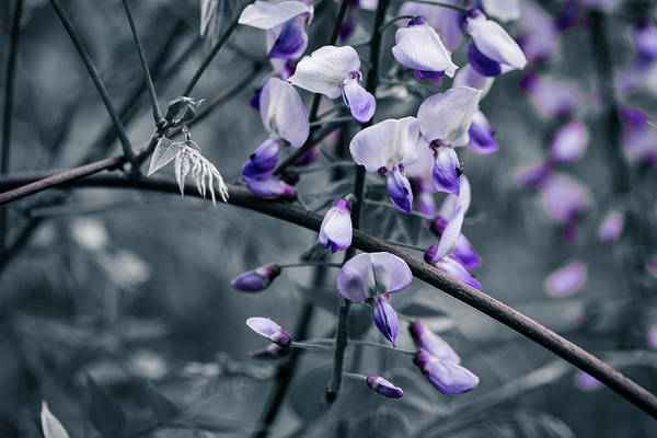 Photograph - Cool Blue Of Spring by ProPeak Photography