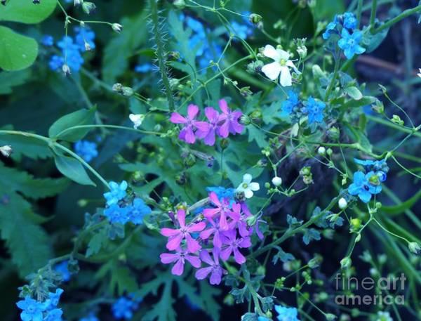 Photograph - Cool Bouquet by Rosanne Licciardi