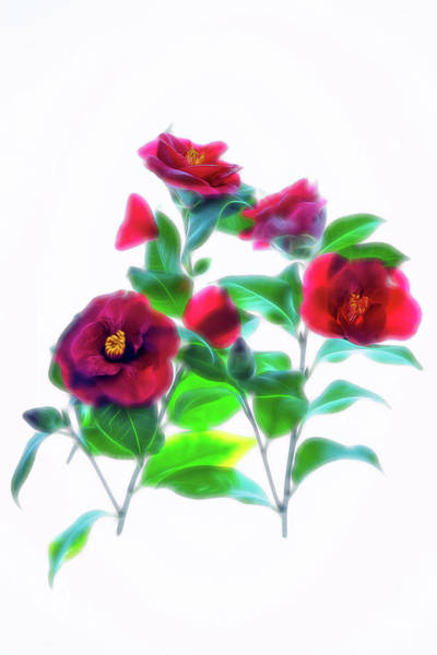 Wall Art - Photograph - Cool Camelia by Ches Black