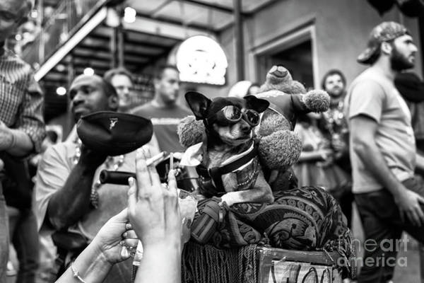 Wall Art - Photograph - Cool Dog On Bourbon Street In New Orleans by John Rizzuto
