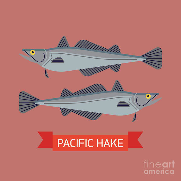 Naval Wall Art - Digital Art - Cool Vector Pacific Hake Fish by Mascha Tace