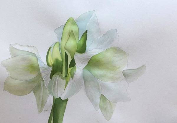 Amaryllis Painting - Cool White by Nicole Curreri