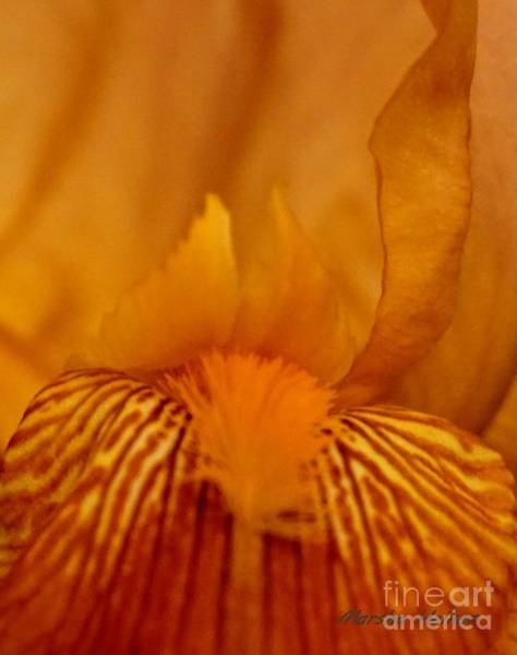 Wall Art - Photograph - Copper Macro Iris by Marsha Heiken