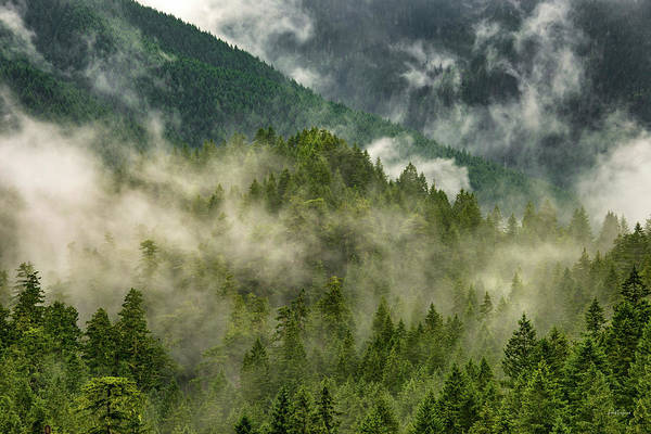 Photograph - Copper Salmon Wilderness by Leland D Howard