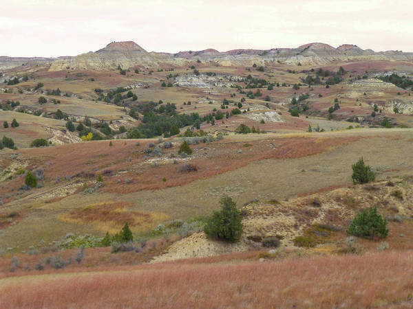 Photograph - Coppery Hills Reverie by Cris Fulton