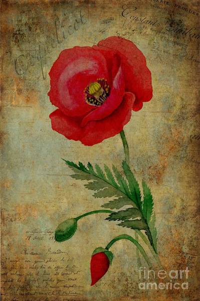 Wall Art - Painting - Coquelicot by John Edwards
