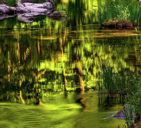 Wall Art - Photograph - Coquille Forest Reflections by Leland D Howard