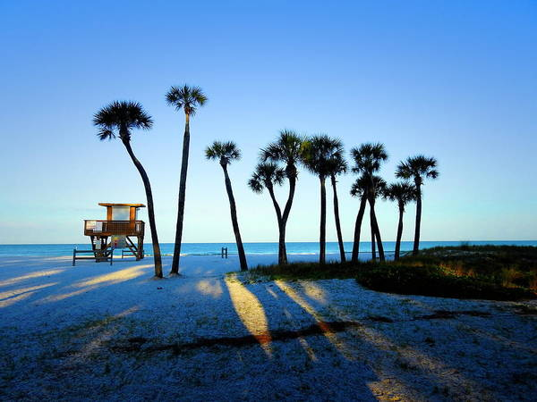 Photograph - Coquina Palms by Robert Stanhope