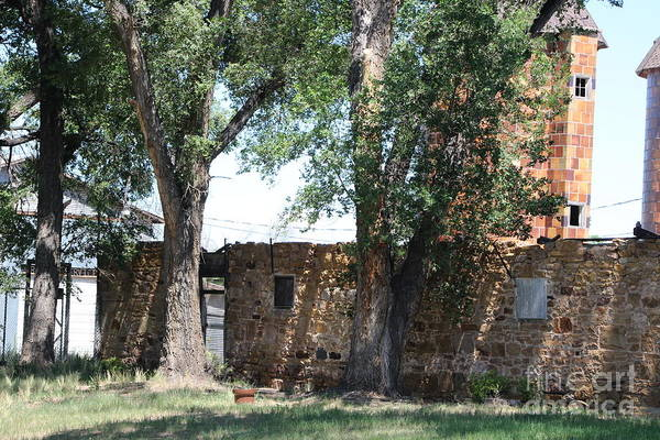 Photograph - Coral At Fort Stanton New Mexico by Colleen Cornelius