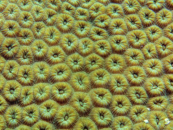 Photograph - Coral Awakening by Jean Noren