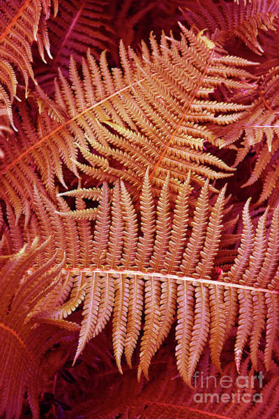 Photograph - Coral Fern Poetry by Silva Wischeropp