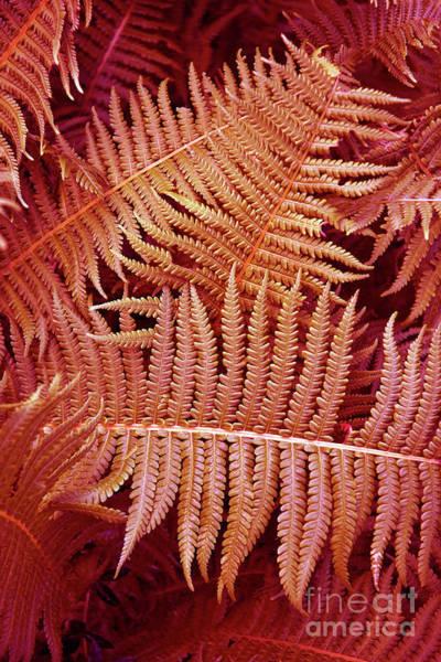 Photograph - Coral Fern Poetry by Silva Wischeropp