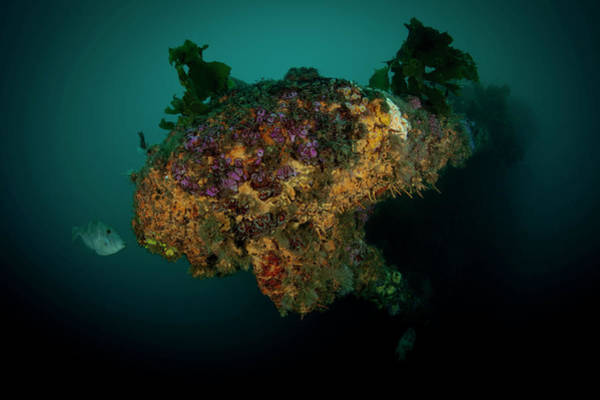 Underwater Photograph - Coral Growing On Underwater Wreck by Cultura Rm Exclusive/richard Robinson