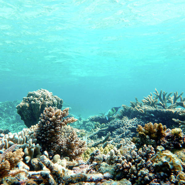 Okinawa Photograph - Coral by Jannes Glas