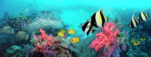 Wall Art - Photograph - Coral Reef Scenery Panorama With by Georgette Douwma