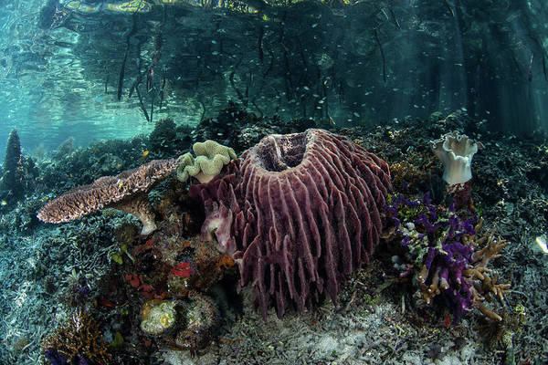 Photograph - Corals, Sponges, And Other by Ethan Daniels
