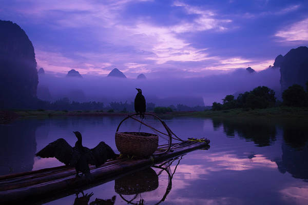 Raft Photograph - Cormorant On Li River by Coffeeyu