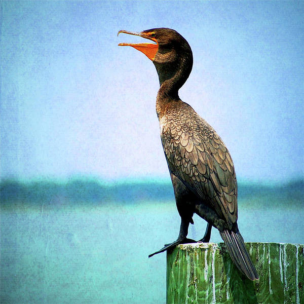 Resting Photograph - Cormorant Rests On Post Overlooking Lake by William Goldsmith