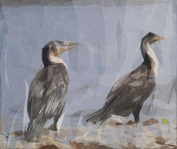 Wall Art - Digital Art - Cormorant White Breasted by Draw Sly