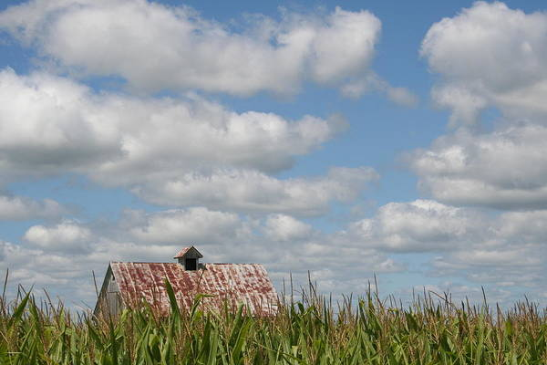 Photograph - Corn Crib Top by Dylan Punke