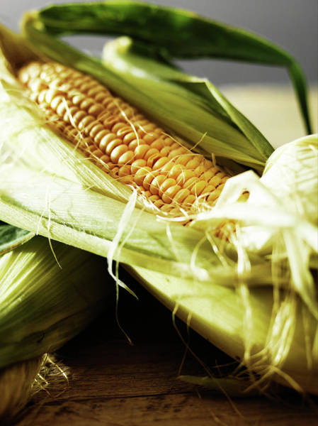 Australia Photograph - Corn On The Cob by Stok-yard Studio