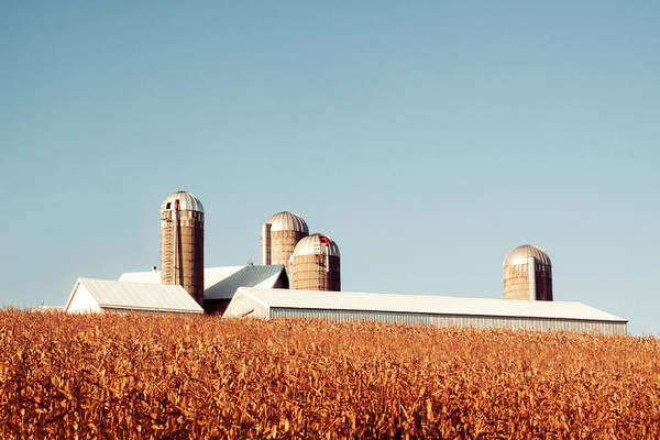 Corn Field Photograph - Corn Rise by Todd Klassy