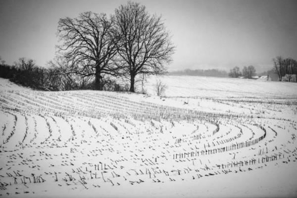 Corn Snow Art Print