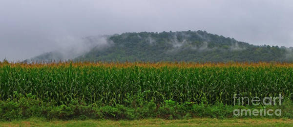 Photograph - Cornfields Of Warren County by Mark Miller