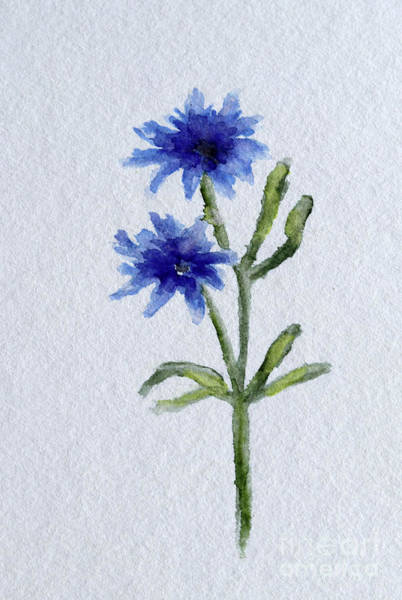 Painting - Cornflower by Christiane Schulze Art And Photography