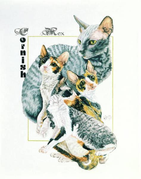 Drawing - Cornish Rex by Barbara Keith