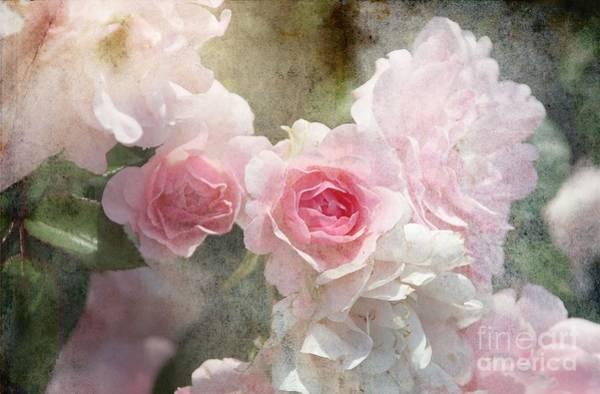 Wall Art - Mixed Media - Coronation Rose by Elaine Manley
