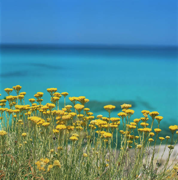 Corsica Photograph - Corsica Coastline With Yellow Flowers by John Miller Photographer