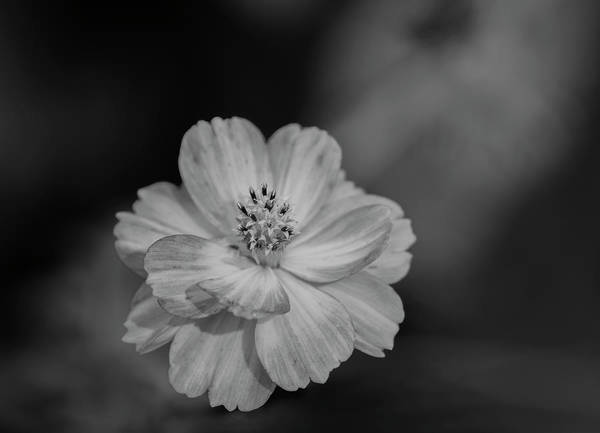 Wall Art - Photograph - Cosmos 2018-2a by Thomas Young