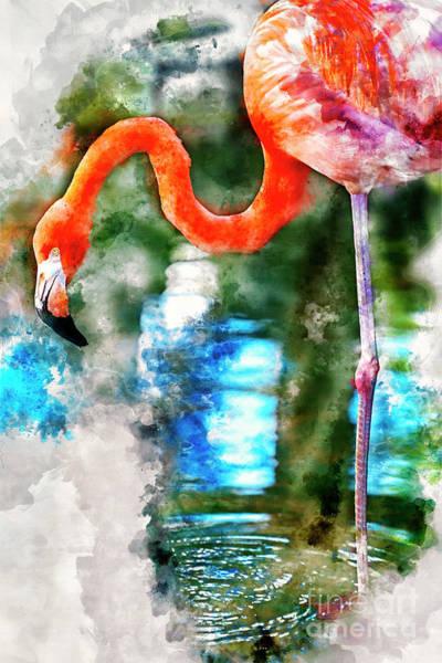 Photograph - Costa Maya Flamingo by David Smith