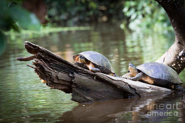 Wall Art - Photograph - Costa Rica, Tortuguero National Park by Ronnybas Frimages